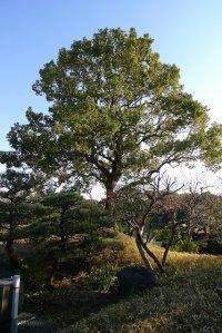 ogród słońce